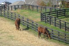 Kentucky Derby Horse Farm Tour