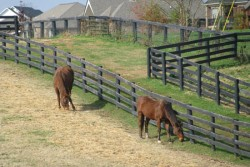 Kentucky Derby Horse Farm Tour