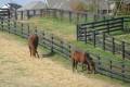Scene from Lexington Horse Farm tour during Derby trip